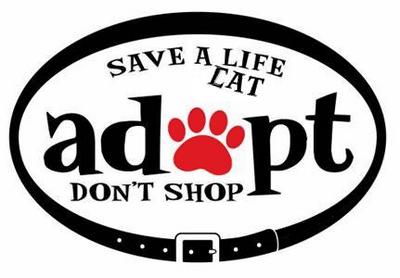 Save a Cat life • Adopt don't shop