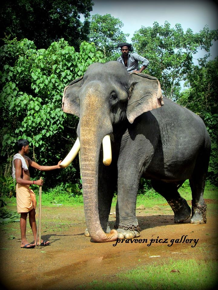 Photo Inbox Elephant Photos Kerala