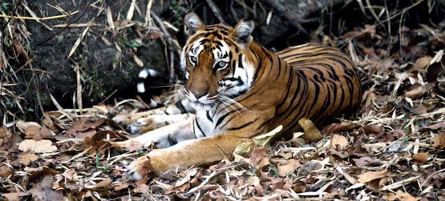 La explotación de la vida silvestre ha provocado la desaparición de muchas especiels animales a un ritmo alarmante, destruyendo la biodiversidad y desequilibrando los ecosistemas.ONU/John Isaac