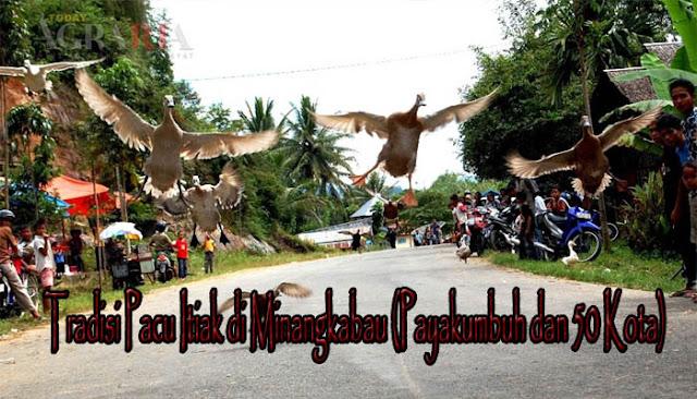 Mengenal Tradisi Pacu Itiak di Minangkabau