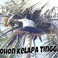 Video Wow Memanjat Pohon Kelapa 15 Meter