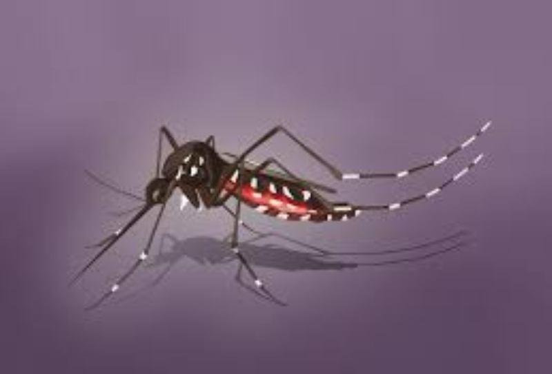 Benarkah Gigitan Nyamuk Sebarkan Virus Corona?