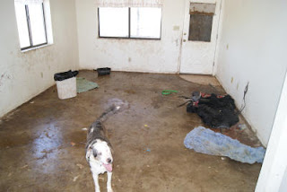 Animal Hoarding News Amp Info Woman Charged With 39 Counts In Animal Hoarding Case