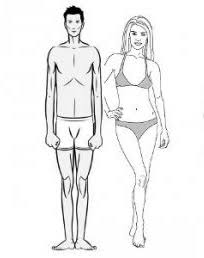 Ectomorph, body type, ectomorph body type