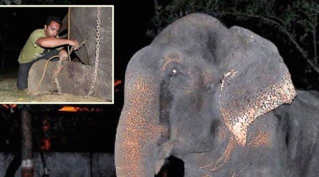 Слон Раджу плакал, когда его освободили!!!