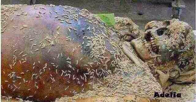 ASTAGHRFIRULLAHAL ADZIM !!! SUNGGUH MENGENASKAN, KISAH NYATA MAHASISWI CANTIK YANG MENINGGAL SETELAH BERZIN4 YANG MEMBUAT ORANG GEMPAR..!!!