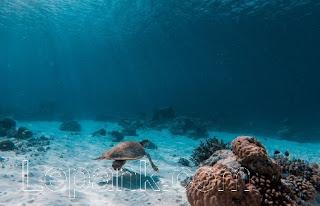 Arti Mimpi Mandi Laut