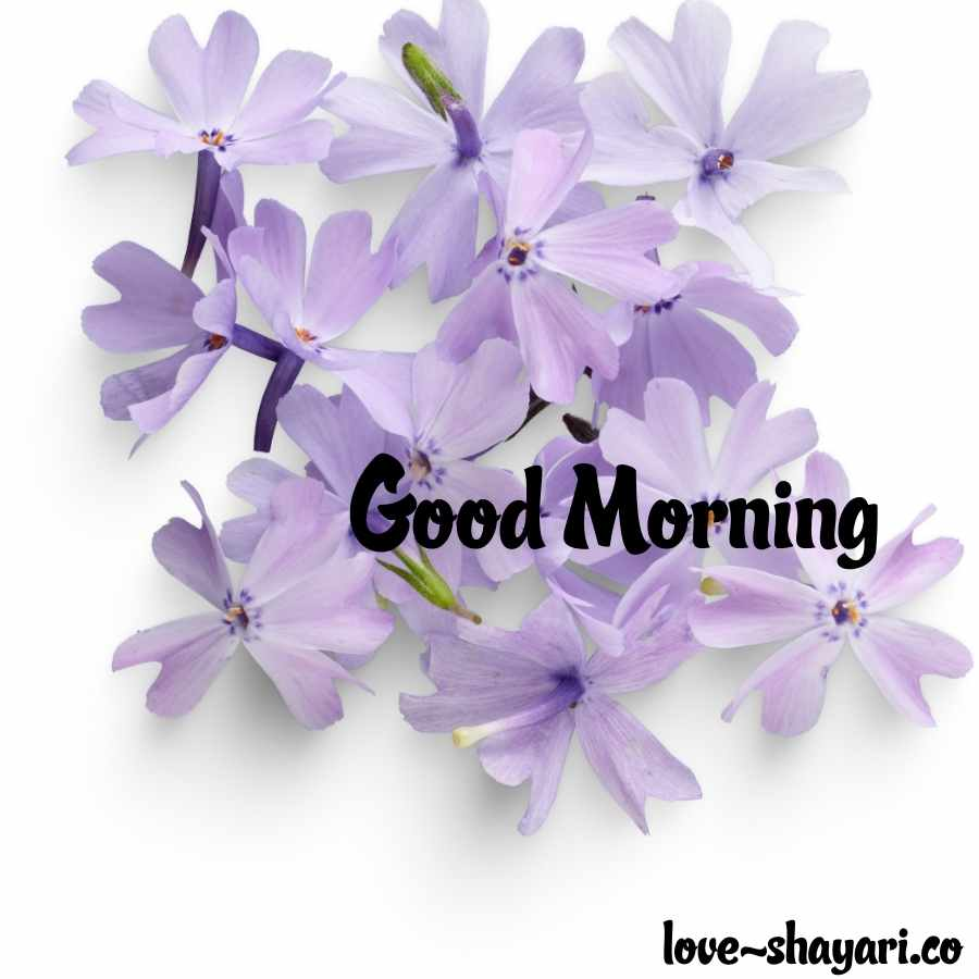 gud morning images flowers