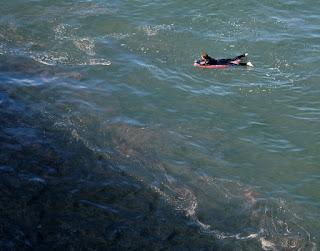 Sự cố tràn dầu 'thảm khốc' ở California giết chết cá, phá hoại các vùng đất ngập nước