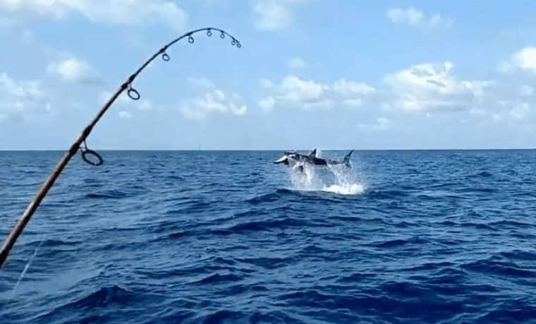 Kinh nghiệm và các loại mồi câu cá biển