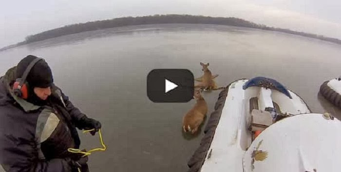 Two Helpless Deer Were Trapped On An Icy Lake. What A Father And Son Did Next Is Totally Brilliant.
