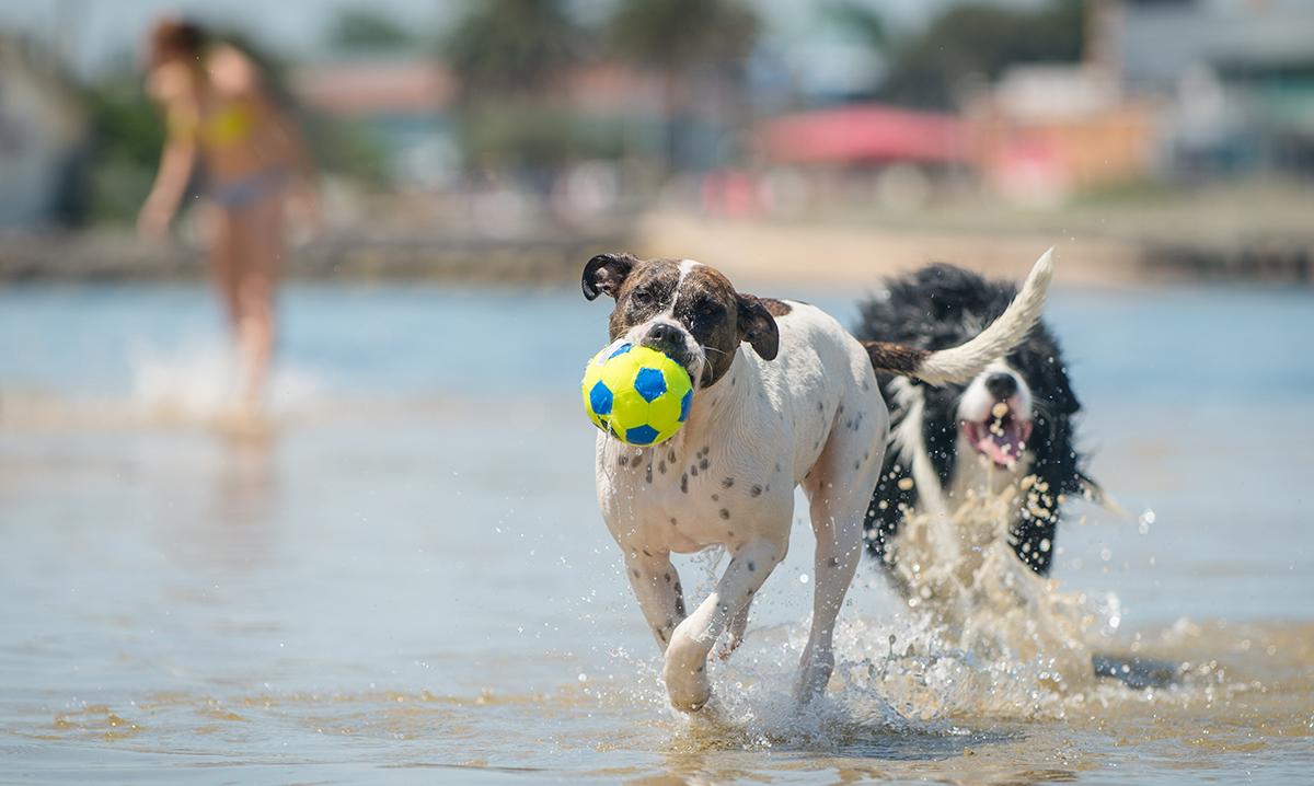 Tips For A Dog Friendly Australia Day Australian Dog Lover