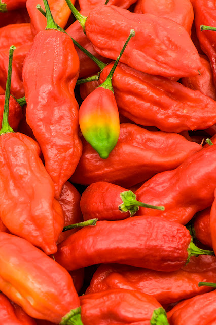 Bhut Jolokia chili rasta colour chili