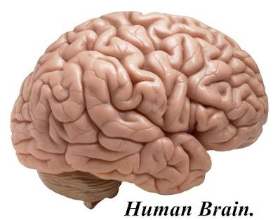 general-knowledge human brain