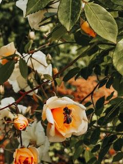 пчелите могат да осигурят до 14 процента от глобалните служби за опрашване