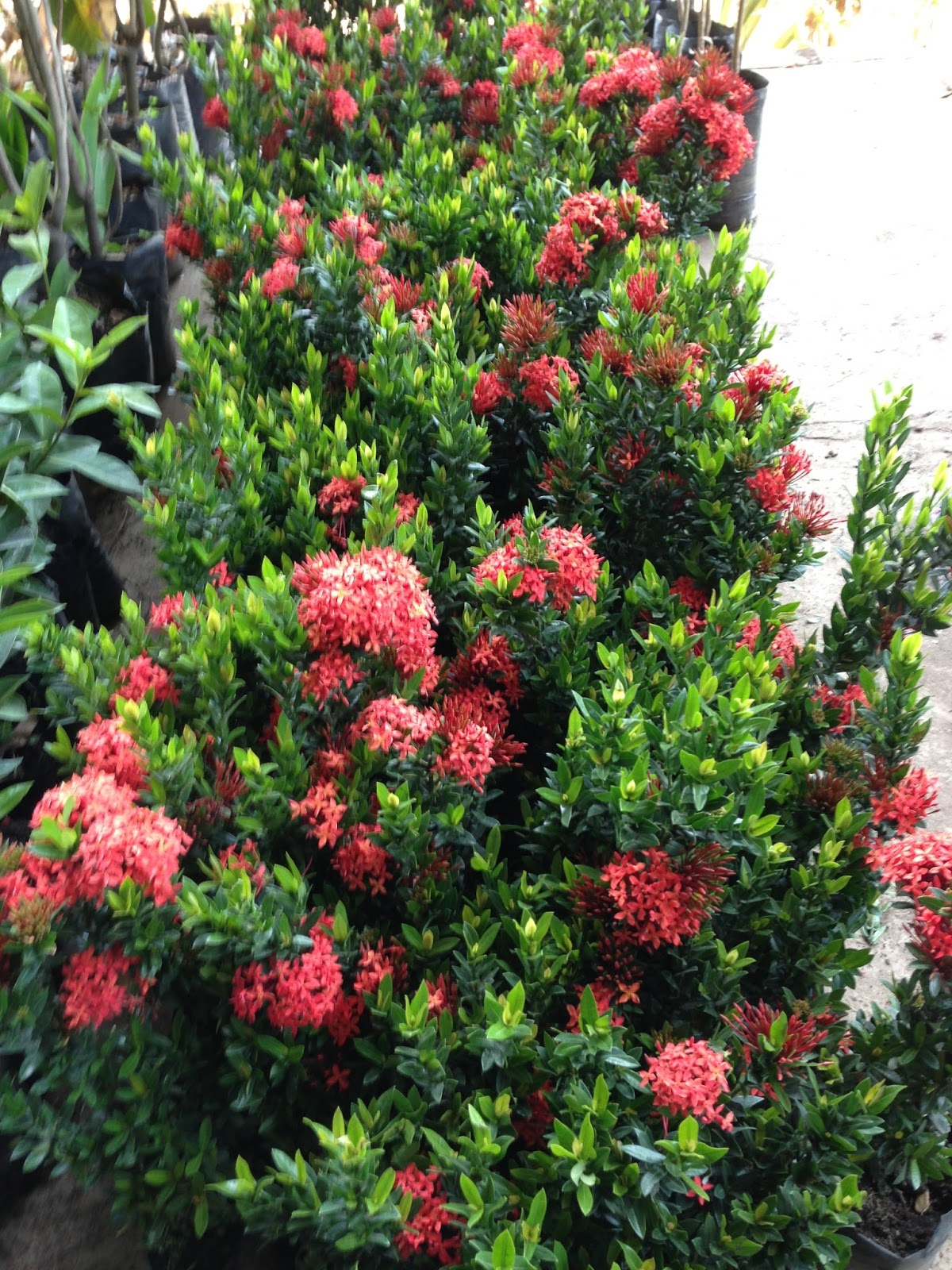 Vivero san andres bondades de las plantas ornamentales for Cuales son las plantas ornamentales