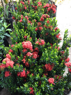 Vivero san andres for Que es un vivero de plantas ornamentales