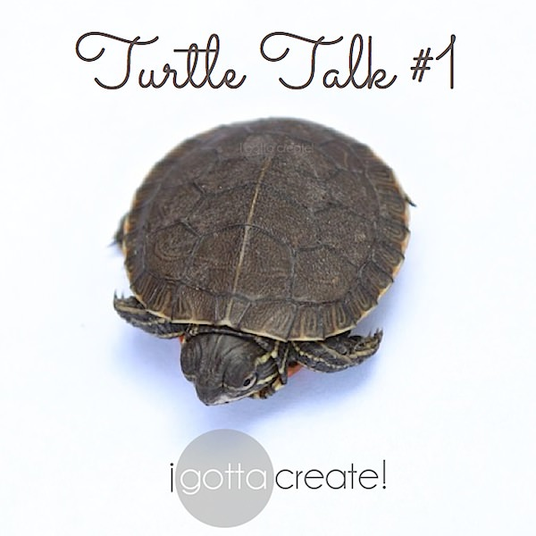 Turtle Talk. Great quotes, sweet image. | visit I Gotta Create!