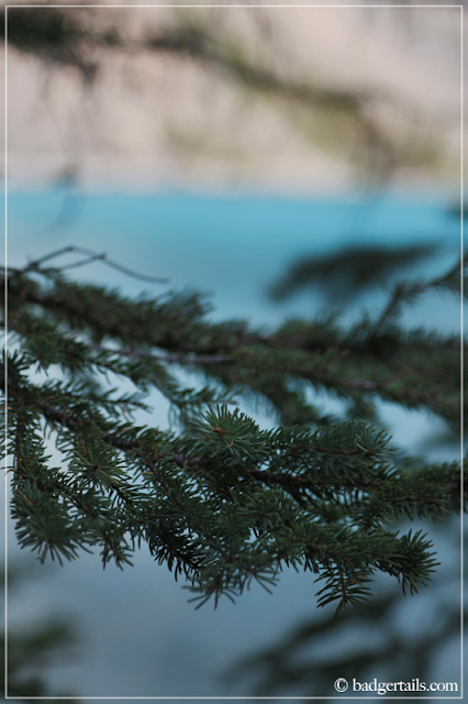 Close up of Pine Sprigs Against Pure Blue Water of Moraine Lake, Alberta, Canada, Canadian Rockies. > See more on Badgertails.com <