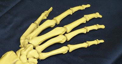 arthritis, artikel kesehatan, glucosamine, glukosamin, herbal, kesehatan, kesehatan tulang, radang sendi,