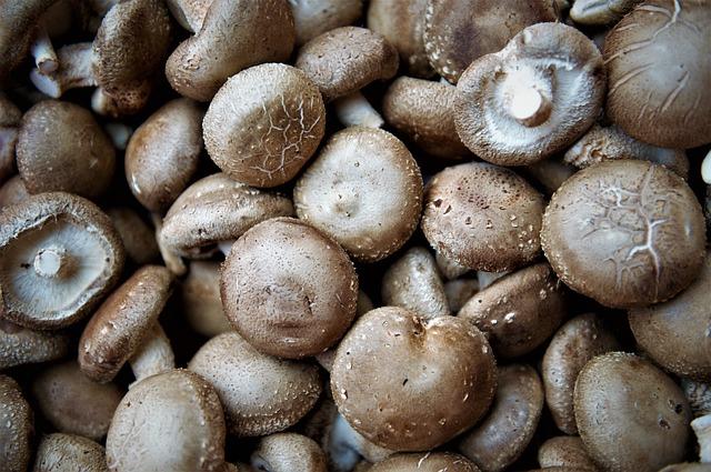Bertanam jamur merang