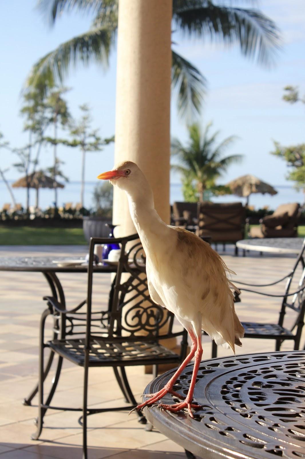 birds of paradise in Jamaica