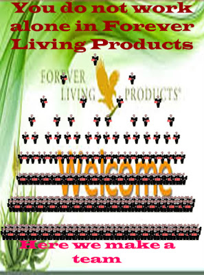 Forever Living Business opportunity