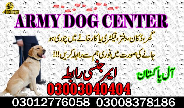 army dog center karachi