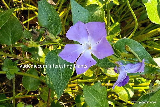 www.vip-colors.com/