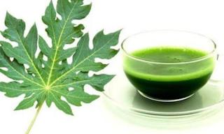 Kegunaan dari jus daun pepaya untuk kesehatan