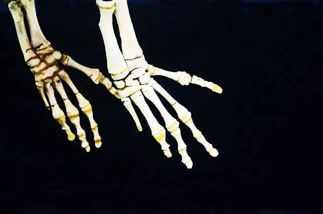 Skeleton hands of marine wildlife photographed in Nago Museum