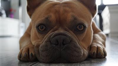 bahaya memelihara anjing bagi kesehatan tubuh