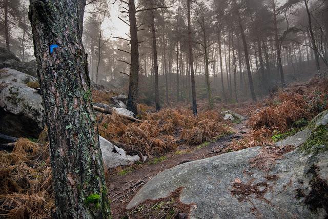 Sentier du Long Boyau, forêt de Fontainebleau.