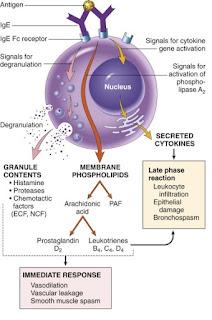 Pengertian dari Patogenesis dan Virulensi