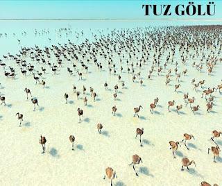 Turkiye'de goller