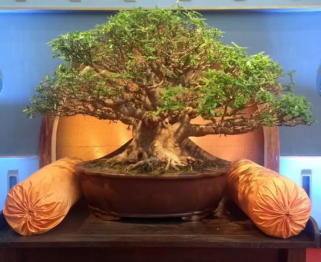 Pune, Bonsai Exhibition, Bonsai Namaste