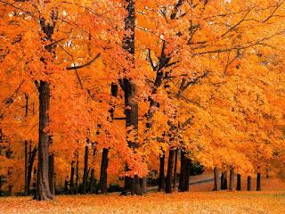 bosque-en-otoño