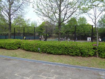 深北緑地公園 テニスコート