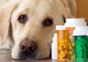 sobre los tumores o bolas de grasa del perro