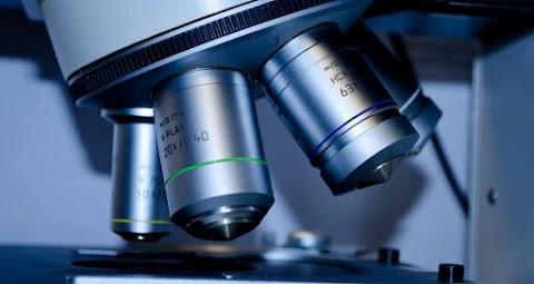Összefügg az immunrendszer sokoldalúsága a kórokozók sokféleségével