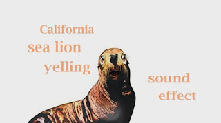 How sea lion sounds