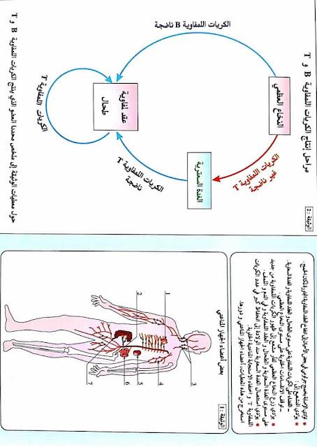 أعضاء وخلايا الجهاز المناعي