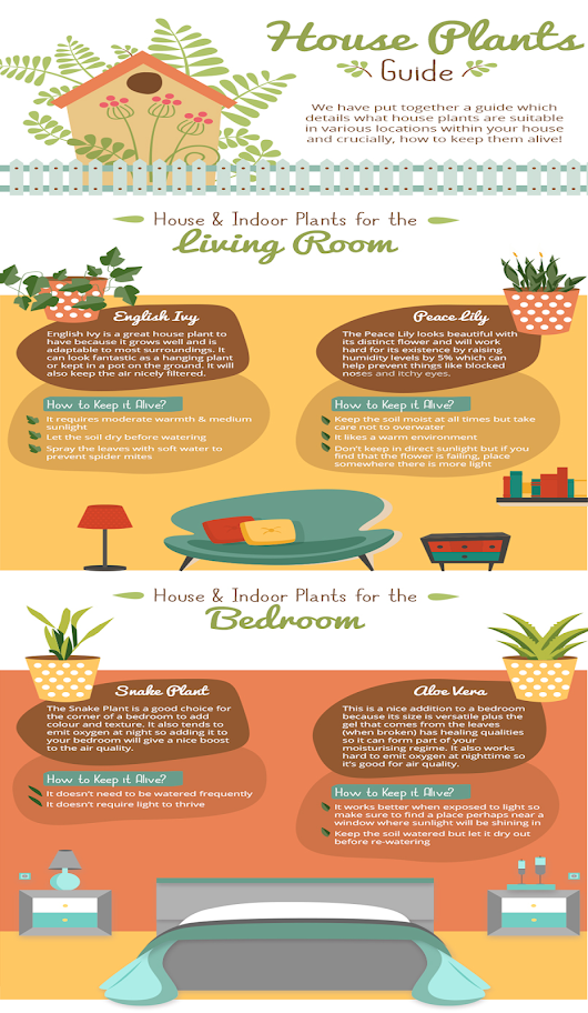 A Guide to House Plants - Floriculture Care - House Plants