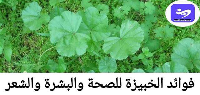 فوائد نبات الخبيزة للصحة والبشرة والشعر