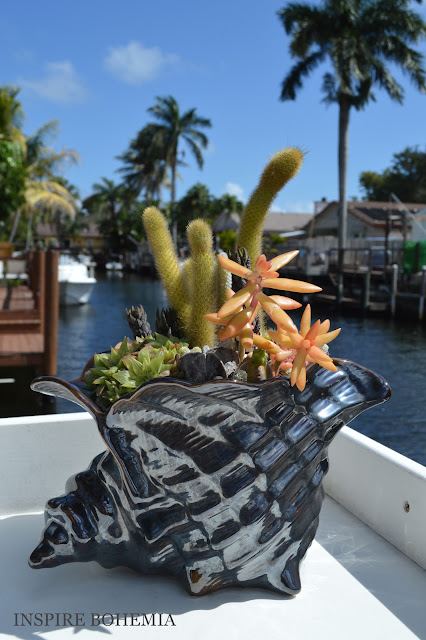 Seashell Oceanfront Dockside Succulent and Cactus Planter - Designer Cactus and Succulent Planters Garden Design Inspire Bohemia - Miami and Ft. Lauderdale Succulent Business