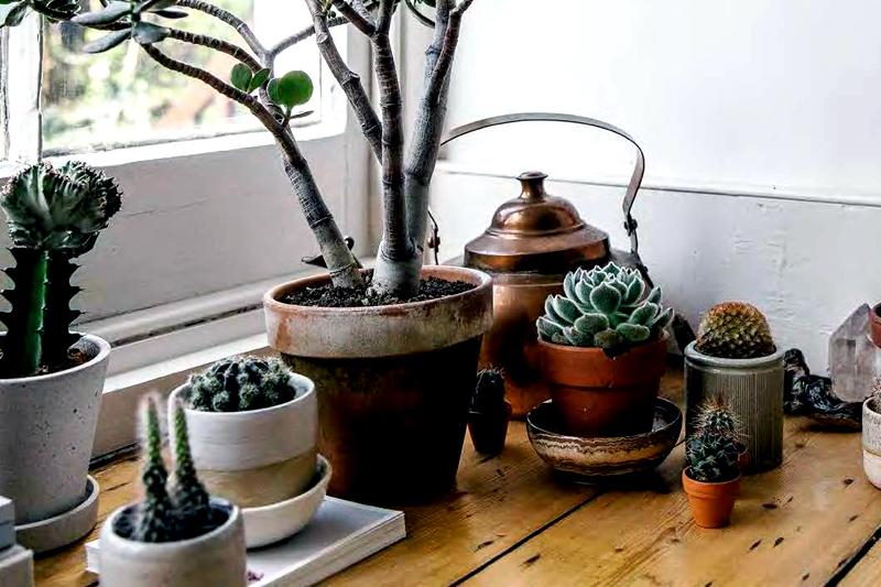 Merawat Kaktus Dan Sukulen Agar Tidak Busuk