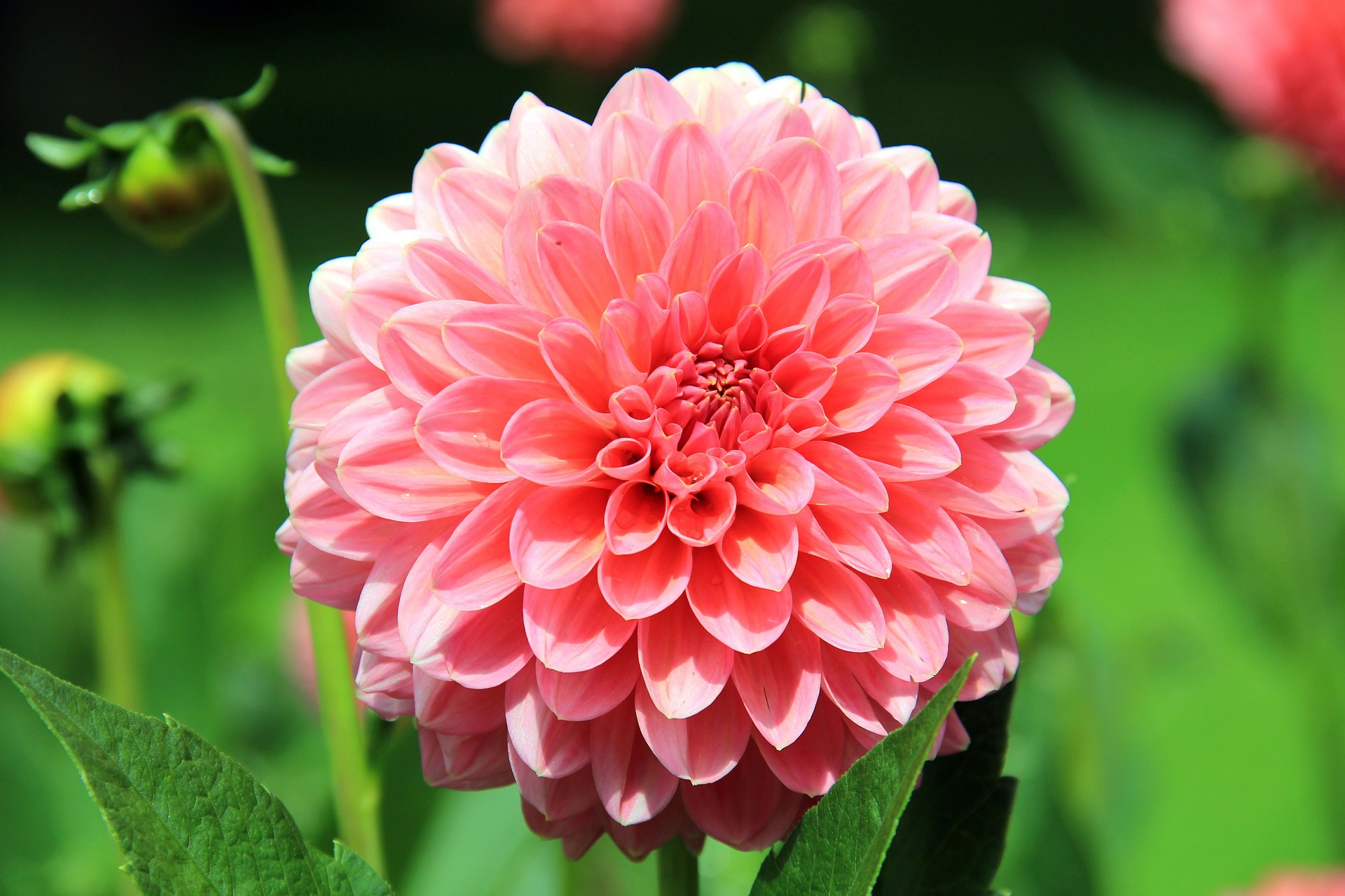 flowers that can survive the heat of summer in your garden