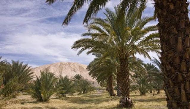 Kisah Pohon Kurma Yang Menangis Karena Rindu Dengan Rasulullah