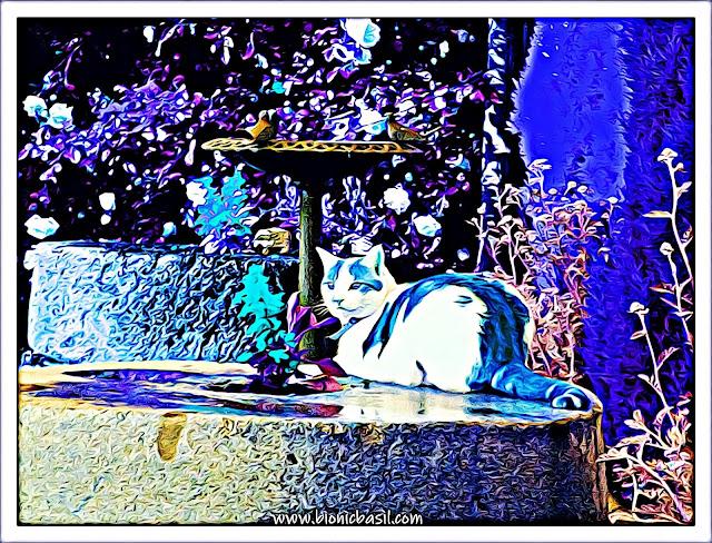 Amber's Sunny Selfie ©BionicBasil® Caturday Art