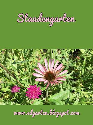 Pin mit blühenden Sommerstauden